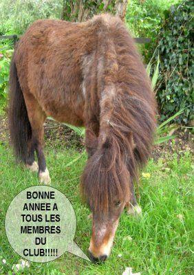 Un cheval trop rigolo centerblog - Cheval rigolo ...
